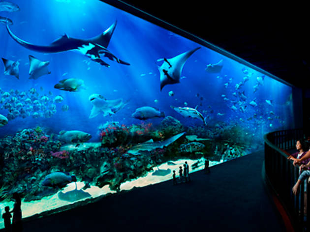 DBS/POSB Special: $50 for 2 S.E.A. Aquarium Tickets and more