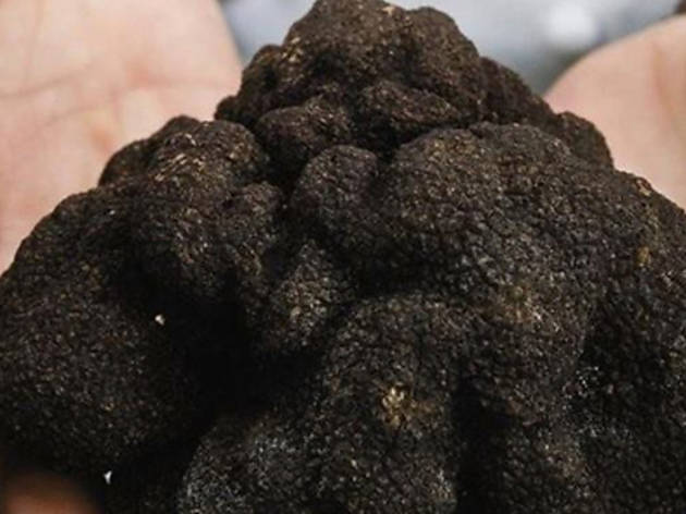 Truffle Wine Dinner by Merchants and Towerhill Estate