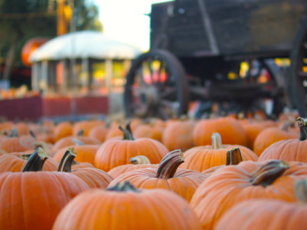 The Best Pumpkin Patches In Los Angeles