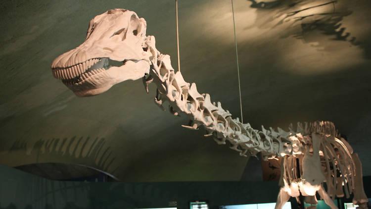 Museo de Historia Natural (Foto: Alejandra Villegas)