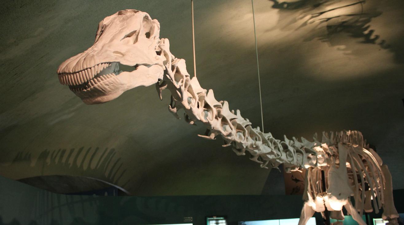 Museo de Historia Natural y Cultura Ambiental. Dinosaurio