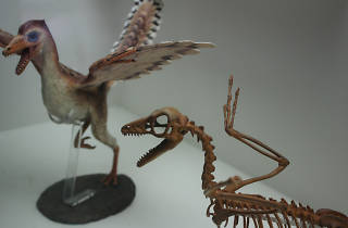 Museo de Historia Natural y Cultura Ambiental