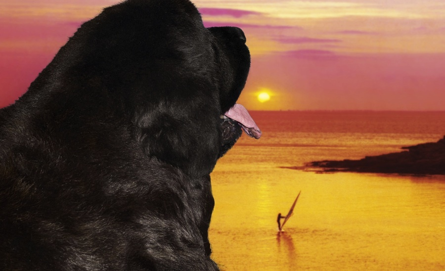 Evasion : les plus beaux couchers de soleil dans l'art