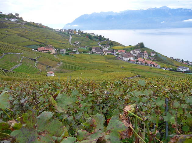 Lavaux vineyards, Time Out Switzerland