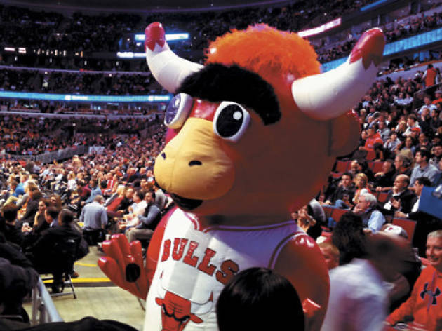 Chicago Bulls guide