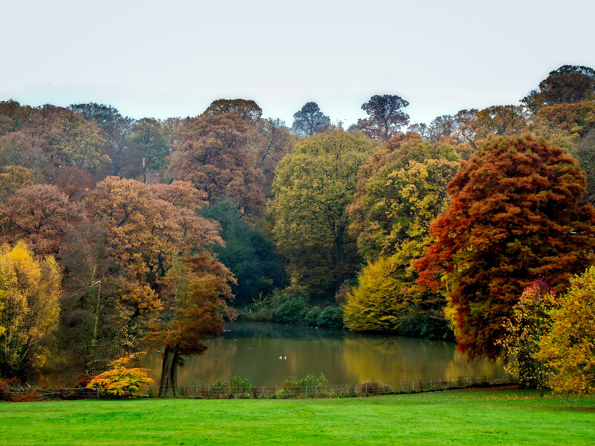 Hampstead Heath, Autumn