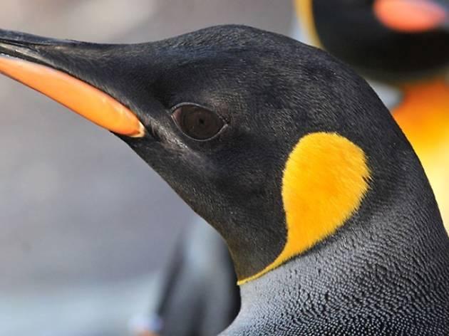 Penguin Talk, Edinburgh