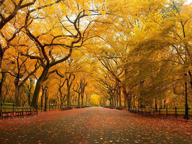 Check out the best things to do in the fall in NYC