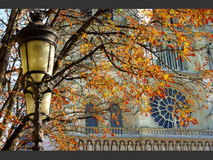 40 photos d'automne à Paris