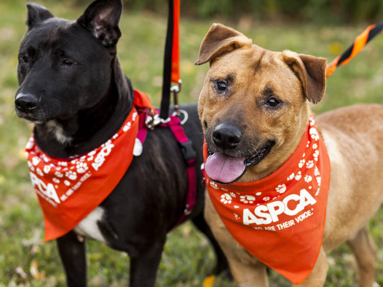 The best pet adoption and foster centers in NYC