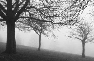 Sinister Sunny Hill Park