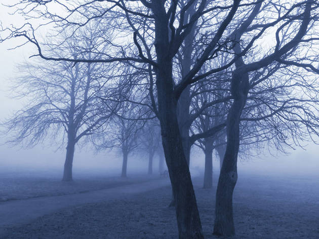 Trembling trees