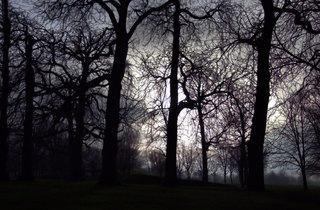 Shadowy Kensington Gardens