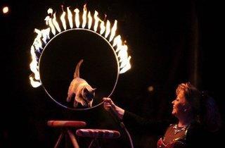 Cirque de Noël Genève