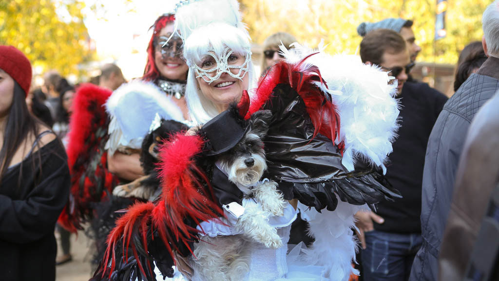 The 30 best photos from the Halloween Dog Parade (2014)