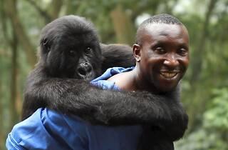FiCMA 2014: Virunga