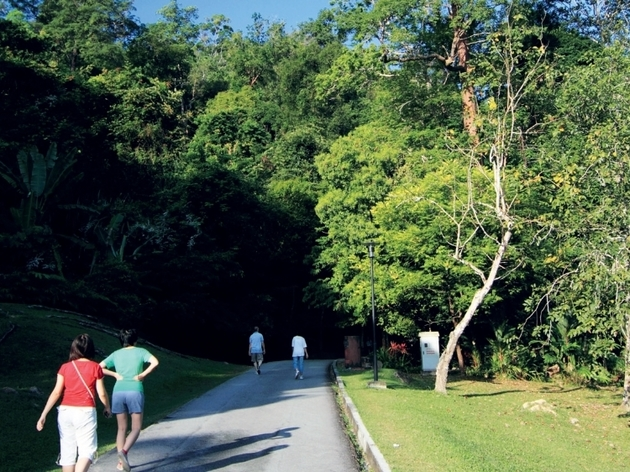 Guided walk at Penang Botanic Gardens
