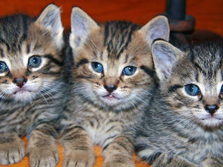 You could be nuzzling kittens like these today.