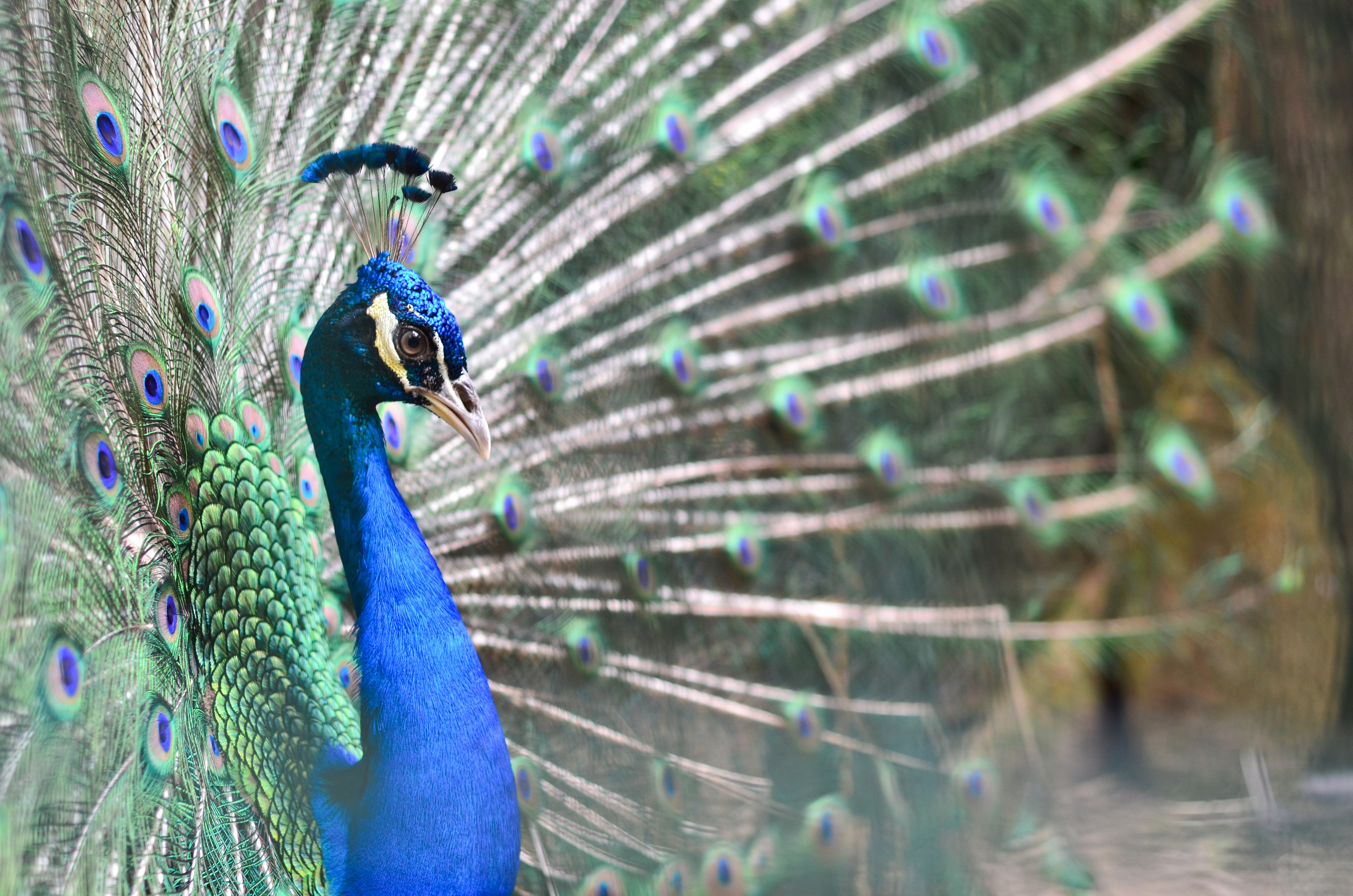 Marvel at amazing aviary at Penang Bird Park