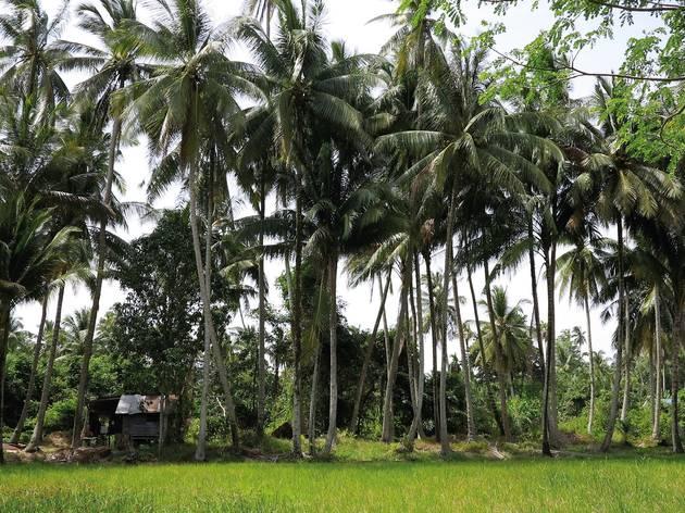 Mainland Penang: Seberang Perai