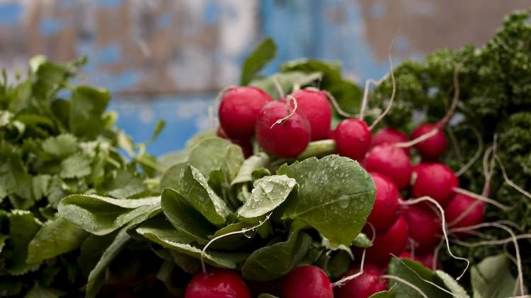 radis légumes