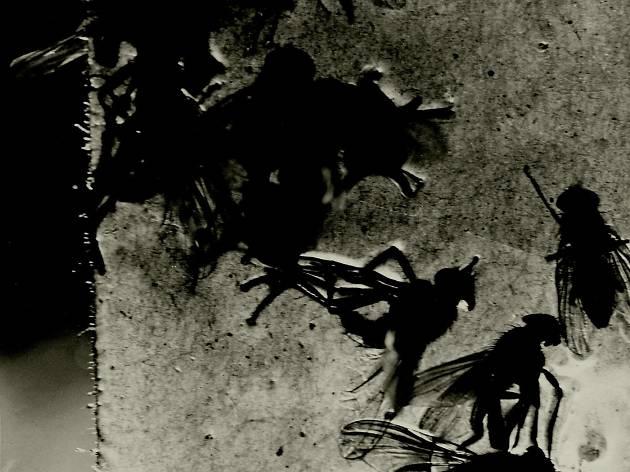 (Jacques-André Boiffard, 'Papier collant et mouche', 1930 / Photo : © Centre Pompidou, MNAM / CCI, Dist. RMN-GP / G. Meguerditchian / © Mme Denise Boiffard)