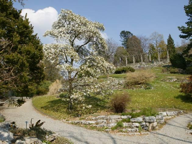Jardin Botanique 2