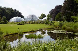 Botanischer Garten, Zuerich, Juni 2014. Photo by Elisabeth Real
