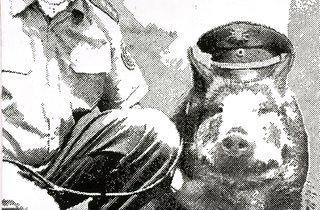 Sigmar Polke ('Police Pig (Polizeischwein)', 1986 )