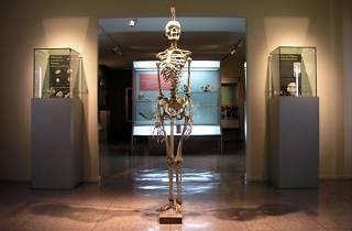 Museo Reverte Coma