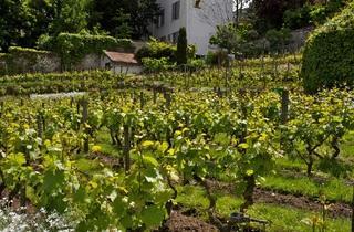 Bas des Vignes  (Thomas Dupaigne )