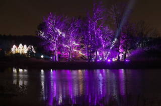 Tree Lights at The Morton Arboretum