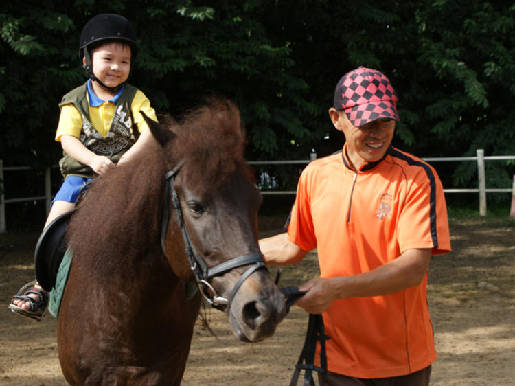 Ride a horse at Gallop Stable