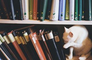 Kitty  (© Malbork   )
