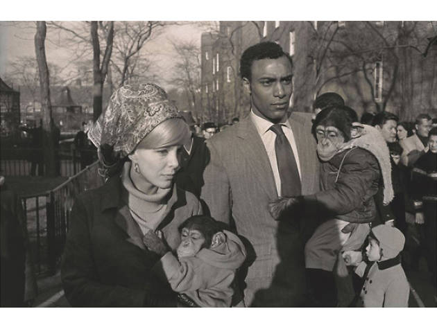 Garry Winogrand,  Central Park Zoo, New York 1967