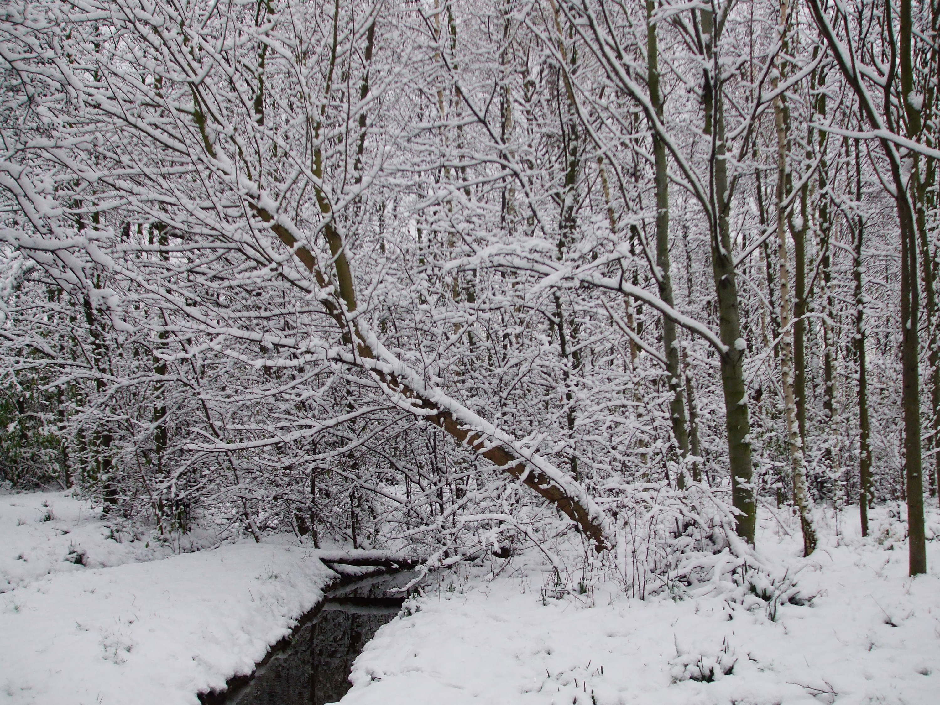 Greenwich Peninsula Ecology Park, snowy woodland