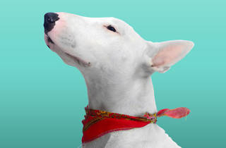 Time Out Pets en Corredor Cultural Roma Condesa