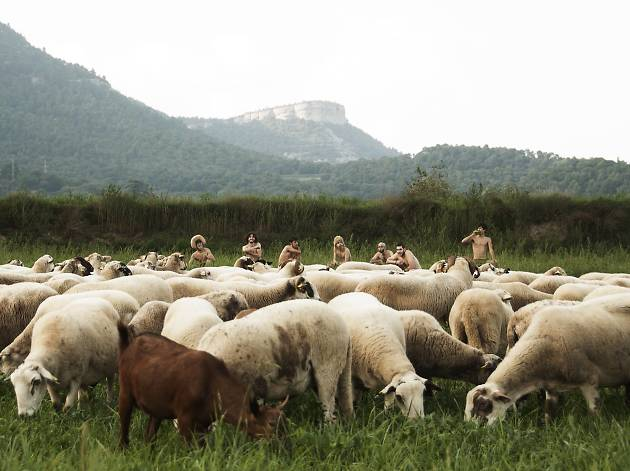 El dia de l'Esperit Xai : Oques Grasses