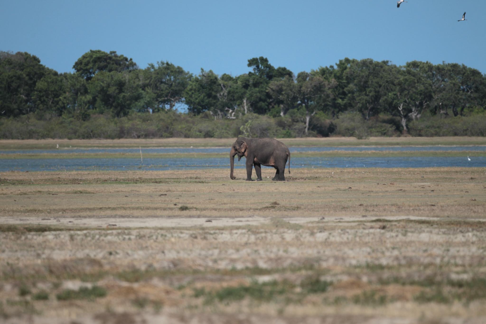 A wildlife park in Hambantota