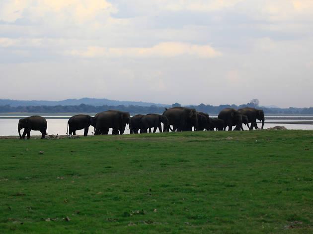 Minneriya National Park
