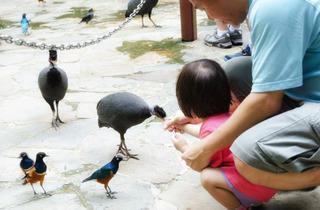 Jurong Bird Park: holiday activities for kids