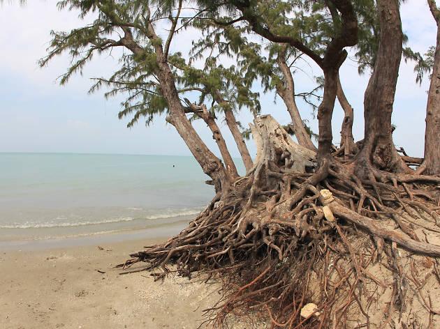 A scenic beach in the Jaffna District
