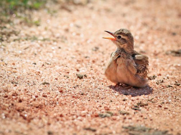 Kalametiya Bird Santuary