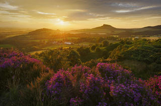 (Heather in Bloom, North York Moors, England by John Robinson - 'Countryside is GREAT' Award Winner 2014)