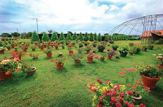 Mirijjawila Botanical Garden
