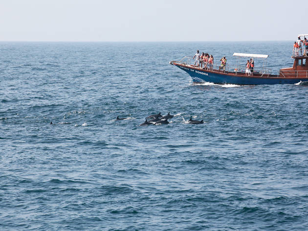 Whale and dolphin watching in Mirissa and Kalpitiya in Sri Lanka