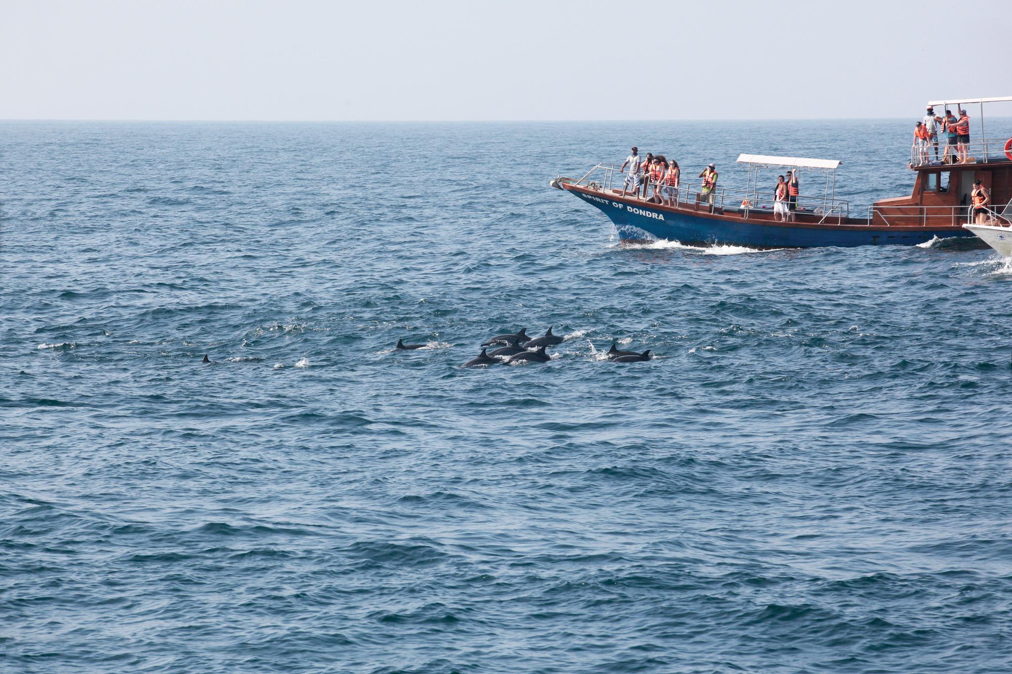 Whale watching in Mirissa and Kalpitiya