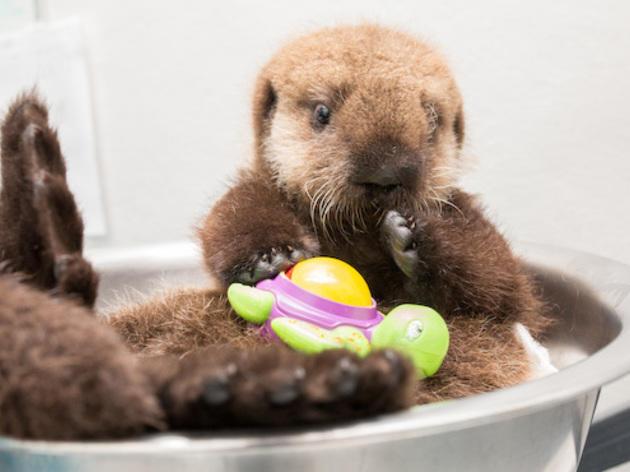 See colorful fish and cute otters at Shedd Aquarium