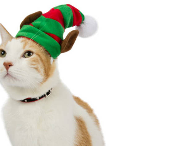 Best Cat Costumes For The Holidays