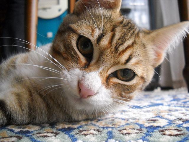 Our favourite Paris cats